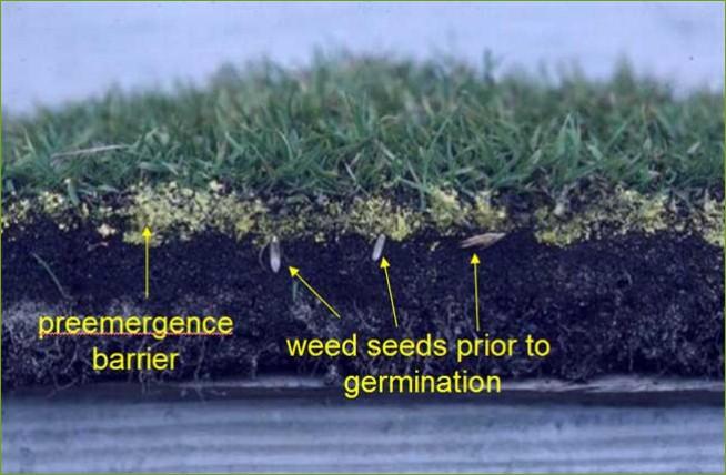 diagram-pre-emergent_herbicide_barrier